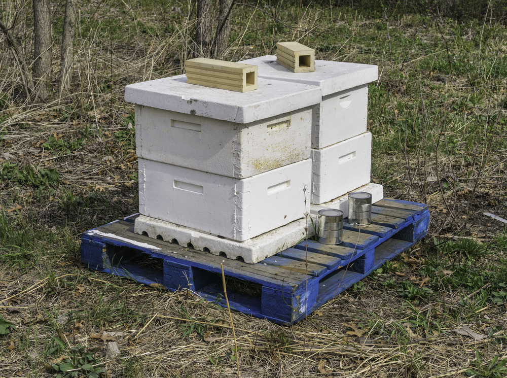 Domestication to promote pollination Apiary beehives stacked together on a wooden pallet near a prairie restoration area in spring, northern Illinois